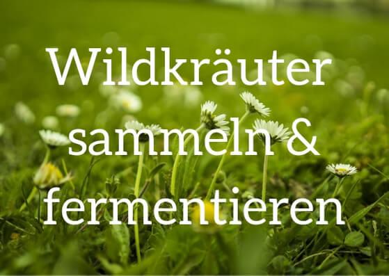 Lerne 30 verschiedene essbare Wildkräuter kennen