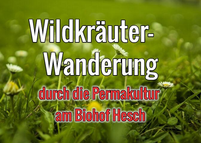 Wildkräuterwanderung-Permakultur